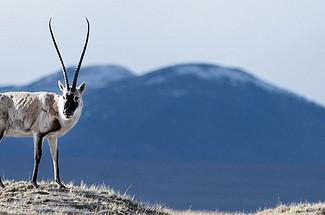 世界第三極 · 無人區 · 野生動物天堂—你所不知道可可西里