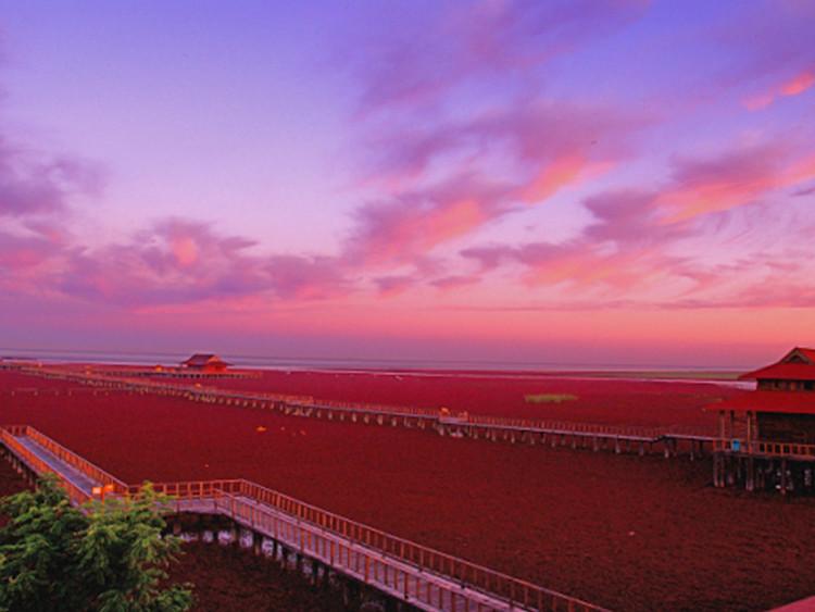 【红海滩】中秋国庆·海上观明月·盘锦红海滩·锦州笔架山·九门口