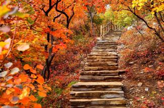 早知坡峰嶺,何必去香山!年度最熱紅葉觀賞區此時秋意更濃!