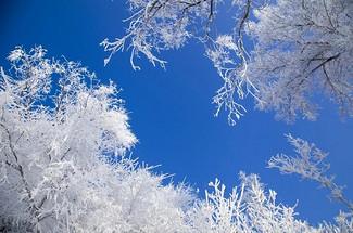 冬日首發團特價1980限時搶購,賞玩冬季哈爾濱,尋夢東北的冰雪奇緣!