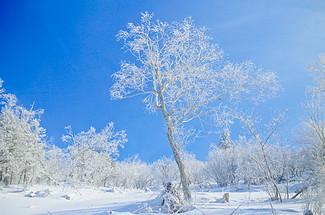 賞玩冬季哈爾濱,體驗潑水成冰,尋夢東北的冰雪奇緣!