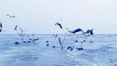 【神奇长岛游】暑假8.6-9日·长岛·蓬莱·万鸟岛·候叽岛·庙岛·海豹苑·拍片吃海鲜·无夜车3.5日游!