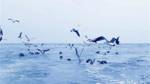 【浪漫长岛游】五一假期·长岛·蓬莱阁·万鸟岛·候叽岛·庙岛·海豹苑·八仙过海·拍片吃海鲜·无夜车4日游!