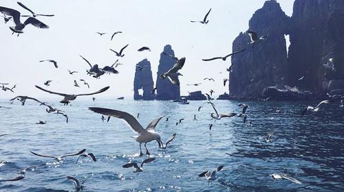【浪漫长岛游】五一假期·5.1-4日·长岛·蓬莱阁·万鸟岛·候叽岛·庙岛·海豹苑·八仙过海·拍片吃海鲜·无夜车4日游!