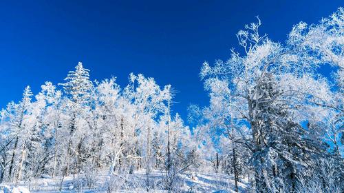 【雪乡】哈尔滨·东升雪谷·徒步穿越·中国雪乡· 私家冰场·亚布力滑雪3日游!