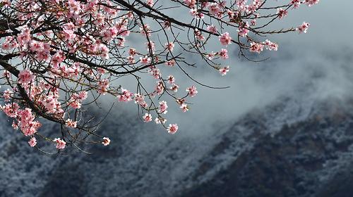 【西藏桃花节】寻梦桃花源——拉萨·大昭寺·林芝/·波密·雅鲁藏布大峡谷9日游!