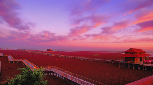 【国庆·红海滩】天天发团·海上观明月·九门口长城·盘锦红海滩·锦州笔架山·休闲3日游