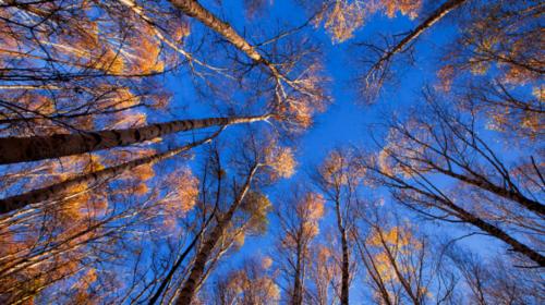 【喇叭沟】周末出发+赏红叶+探索原始深林+白桦林中漫步·休闲1日游!