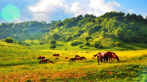 【关山牧场】西安出发直通车(单程/往返)宝鸡大草原·塞内边疆·高山草甸·绿野仙踪·策马奔腾1日游!