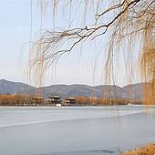 拥抱中国的雄鸡北京篇4