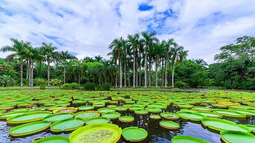 【私享版纳】野象谷+原始森林公园+勐仑植物园+傣族园+茶山体验 热带雨林轻奢度假5日游